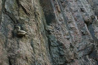 linnut-teos hirsipuunkalliolla