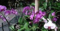gardenianorkideat271107_1.jpg