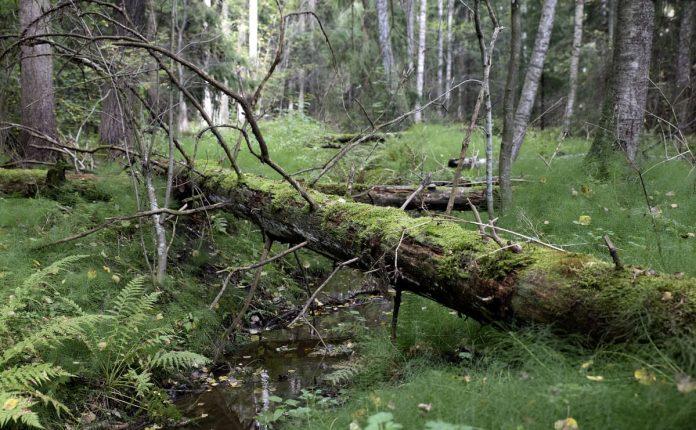 Palheinän metsä