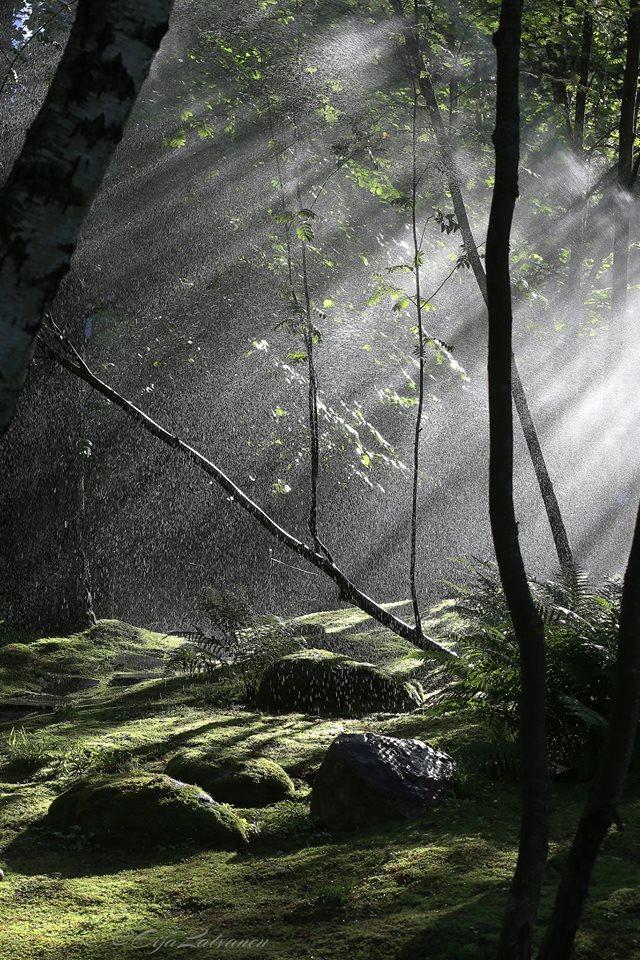 2016 07 19 japanilainen puutarha Eija Latvanen