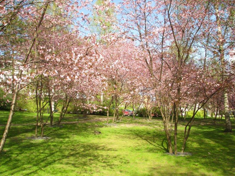 japanilaistyylinen_puutarha.jpg