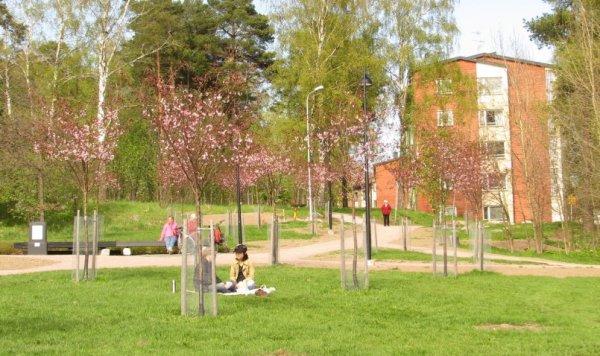 kirsikkapuisto_ii.jpg