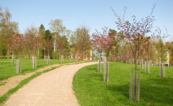 kirsikkapuisto_iii.jpg