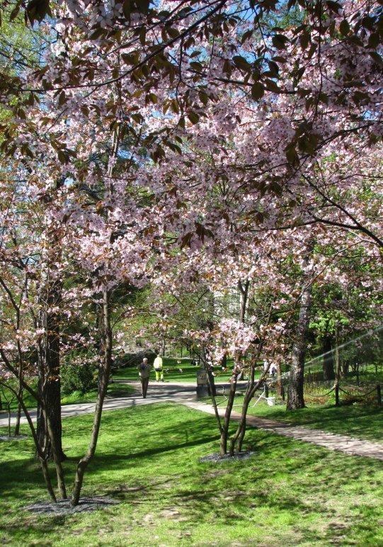 sinisen_lohikrmeen_puutarha.jpg