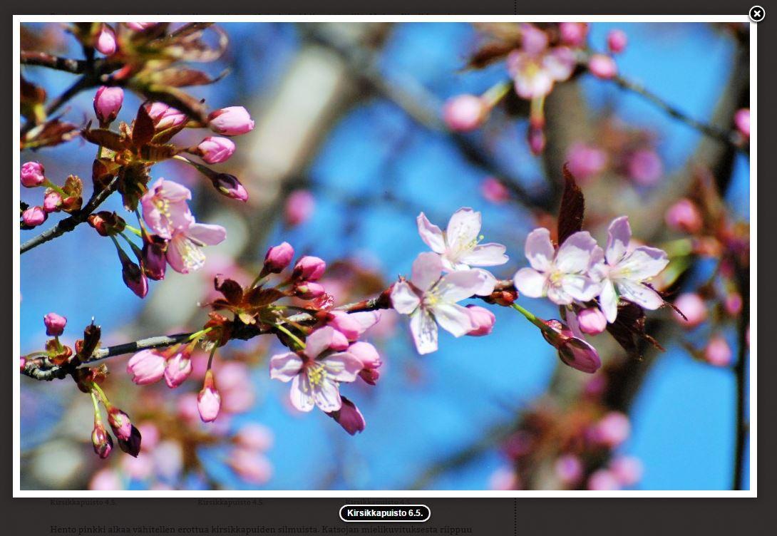 kirsikankukat pekka makela 4